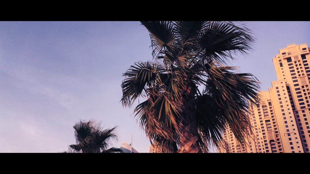 Cinematic iPhone Footage - Palm Tree 100%